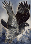Old Gods: Day 31 - Hawk