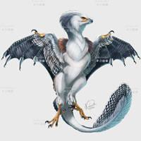 Smaugust: Pygmy Falcon