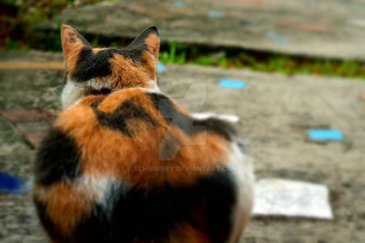 Somebody's Cat