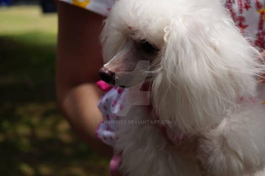 Cutie Pet Fun Fair 2012
