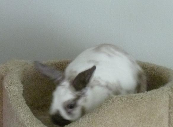 Bunny! by VivaFariy
