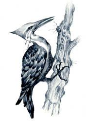 The Weeping Woodpecker by sarajacksonjihad