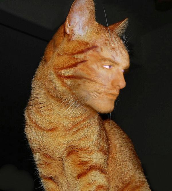 Ferbie cat by Ferkvin