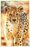 Cheetah (watercolors)