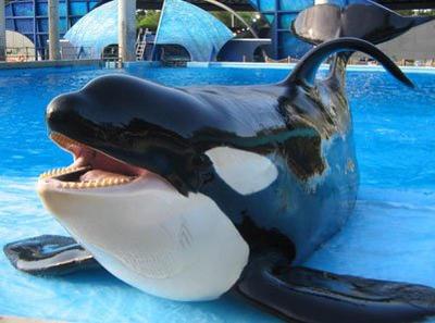 Orca Whale by AgentLaffey119