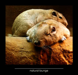 natural lounge by lordmaci