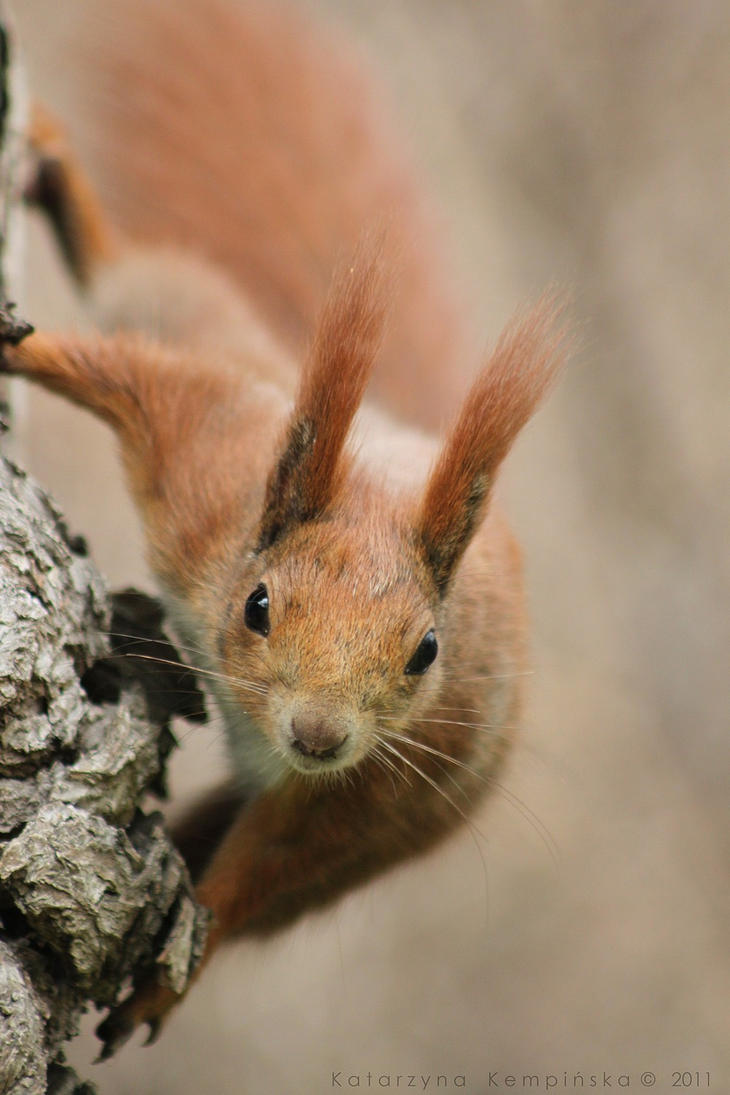 Squirrel by RivenPine