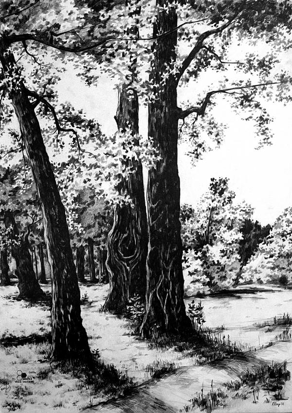 Three Trees by RivenPine