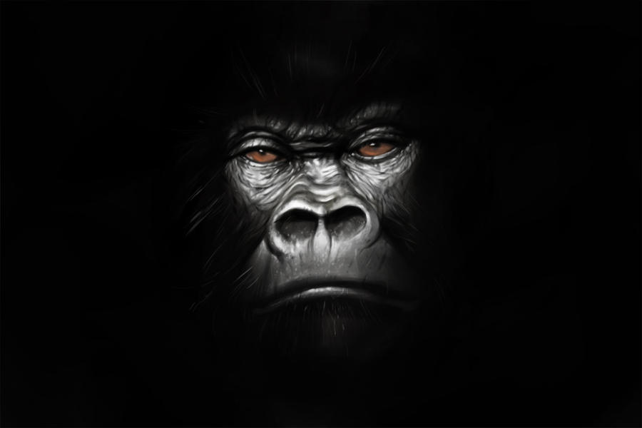 Gorilla by jmont on DeviantArt - photo#16