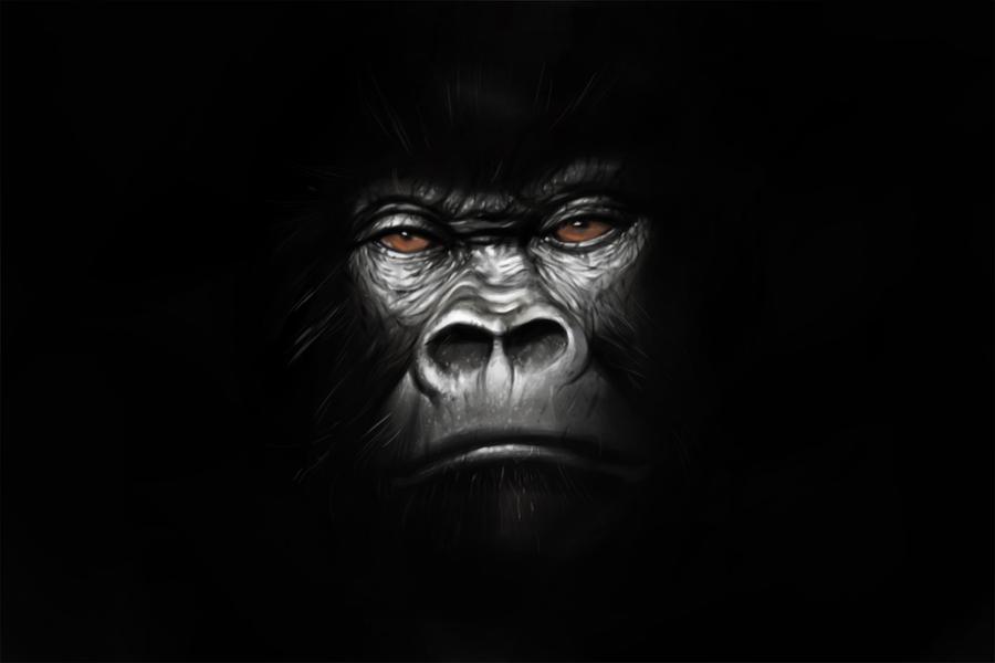 Gorilla wallpaper hd - photo#11