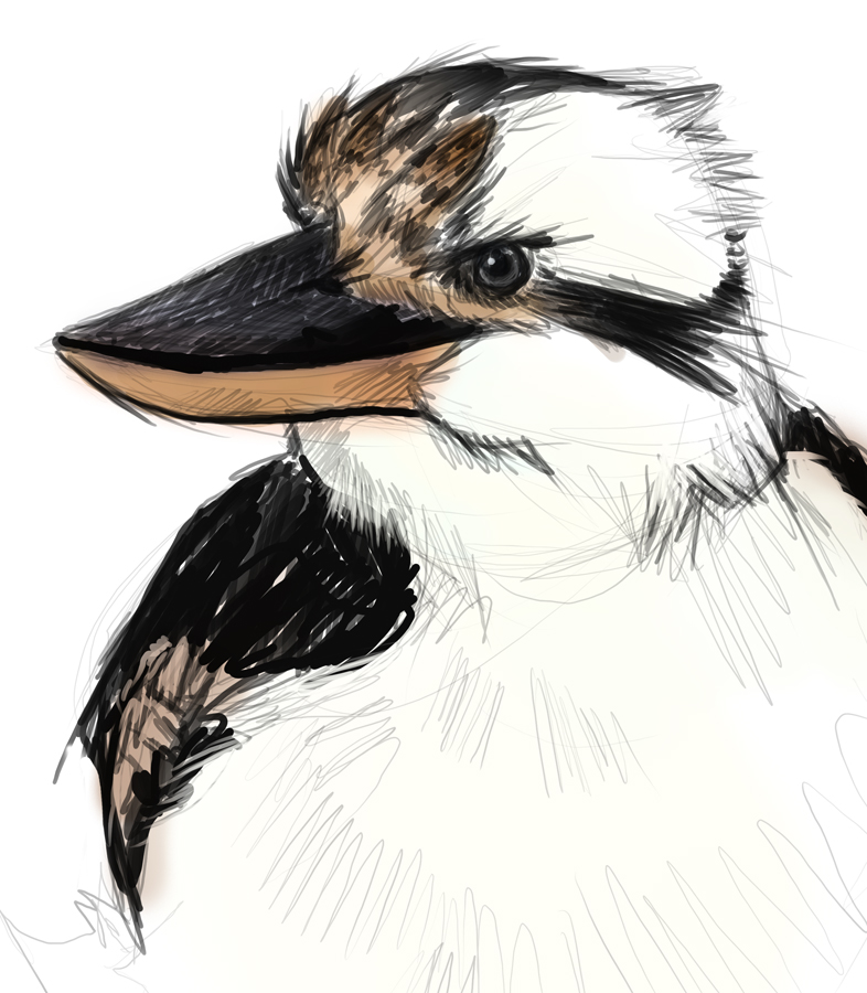 Laughing kookaburra drawing