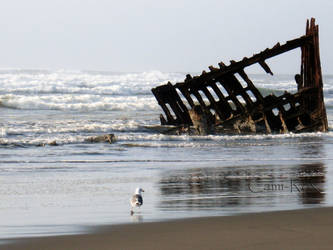 Peter Iredale Seagull by cami-rox