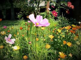 Summer meadow by poisen2014