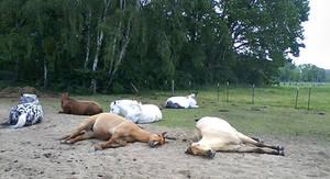 sleeping Horses by poisen2014