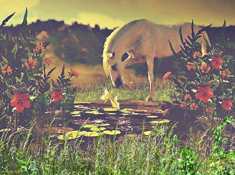 Summer Morning by poisen2014
