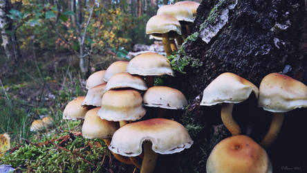 Mushrooms 16