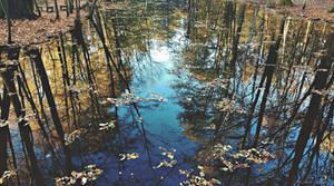 Autumn Mirroring