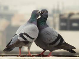 In Love by Saurabh682