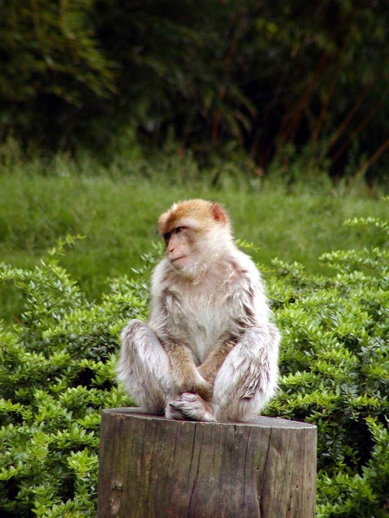 Monkey by michaf
