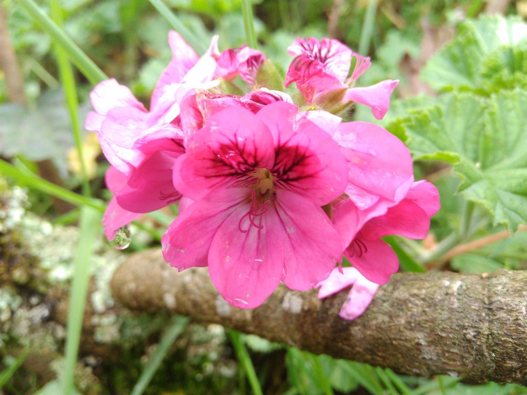 Pink Flower 2 By Kirozeru On Deviantart
