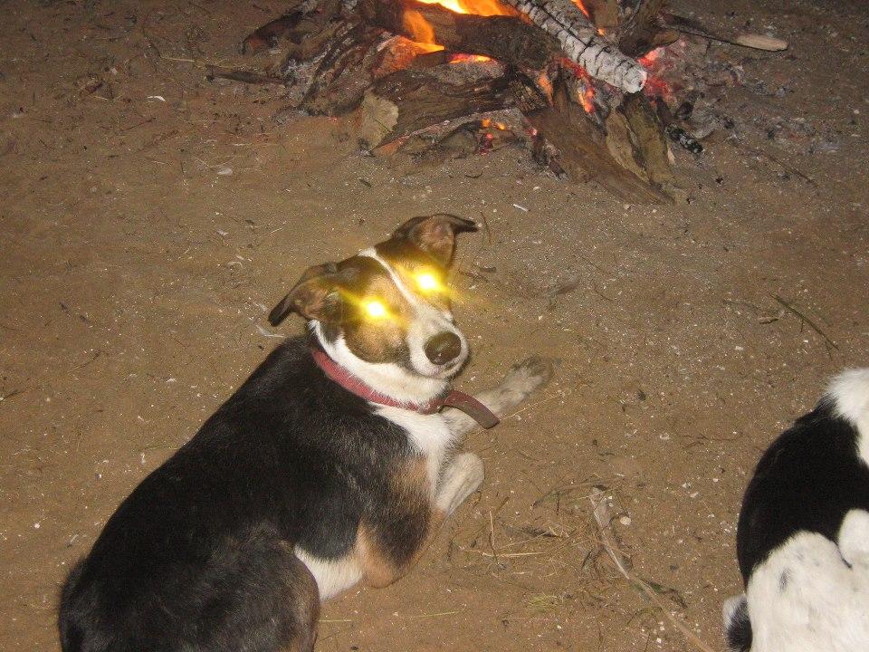 Devil Dog by aconpaddy