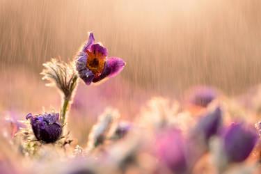 rainy day by MartinAmm