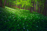 RAMSON FOREST