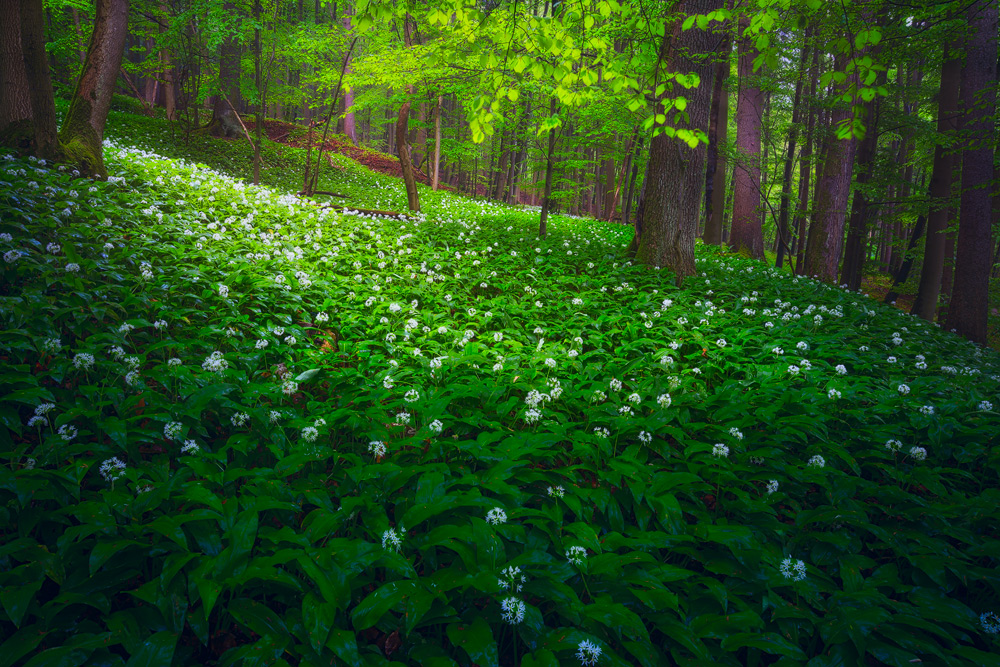 RAMSON FOREST by MartinAmm