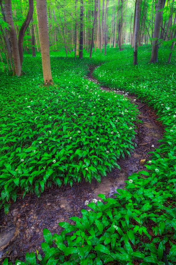 green land by MartinAmm