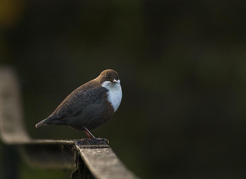 water bird by MartinAmm