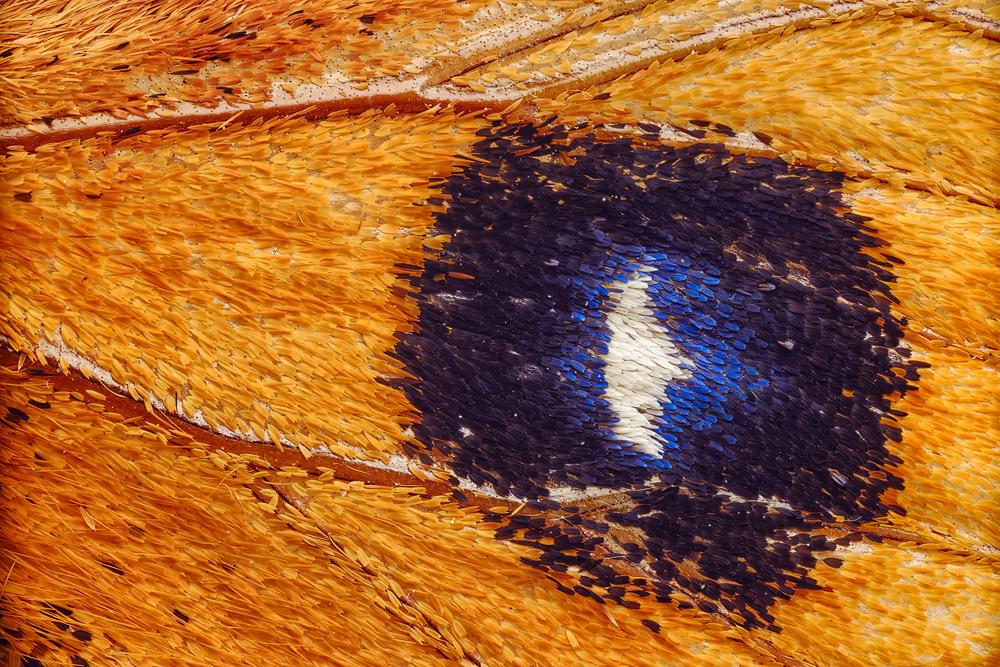 the eye by MartinAmm