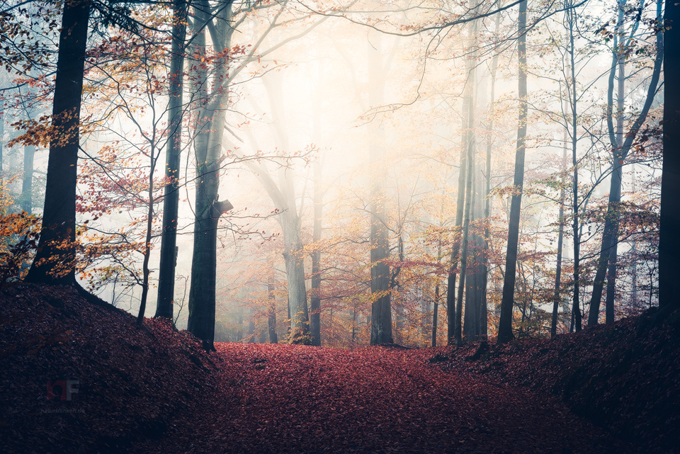 mystic forest by MartinAmm