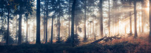 magic forest by MartinAmm
