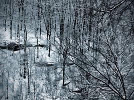 Winter Woods 2 by jaxcullengfx