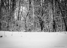 Winter Woods 4 by jaxcullengfx