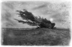 carved by the wind - pinhole