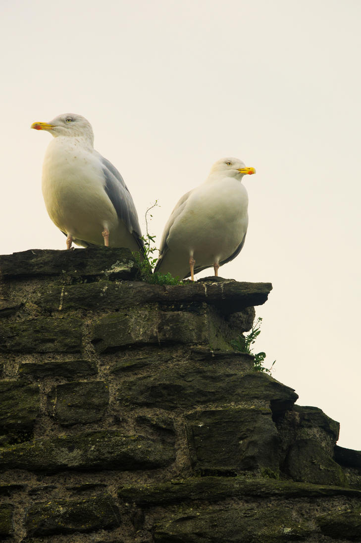 Imperious Gulls by johnwaymont