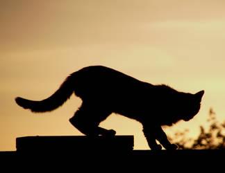 Cat and sunset by sonafoitova