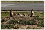 Family prairie dog-serial 1