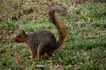 Squirrel on the lunch-serial 2