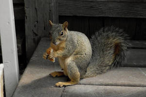 fairytale-how to squirrel bread proverb-serial 4 by sonafoitova