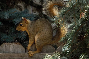 fairytale-how to squirrel bread proverb-serial 6 by sonafoitova