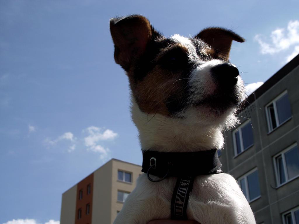 serie-dog 1 by sonafoitova