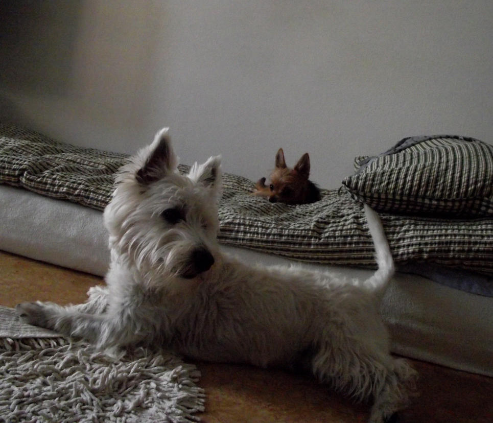 serie-dog 5 by sonafoitova