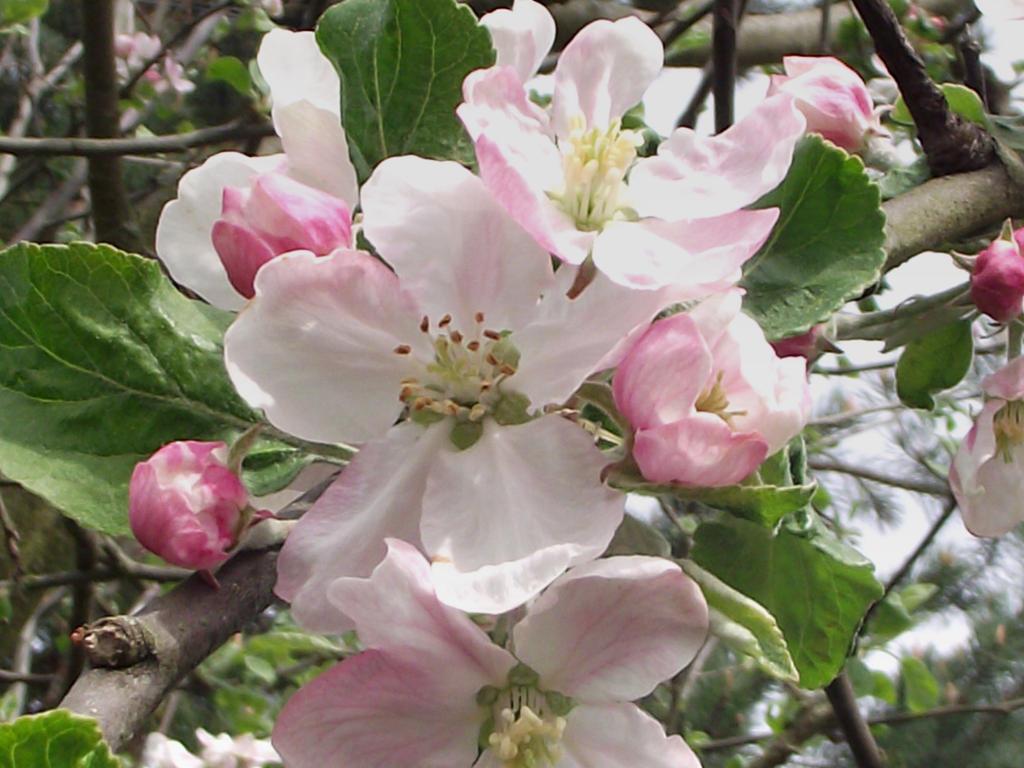 makro flower by sonafoitova
