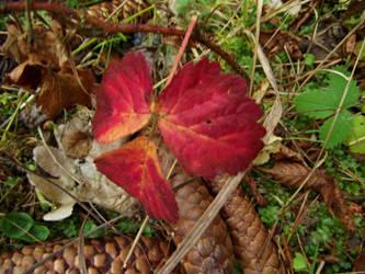 Fall in forest-Czech Republic-serial 1 by sonafoitova