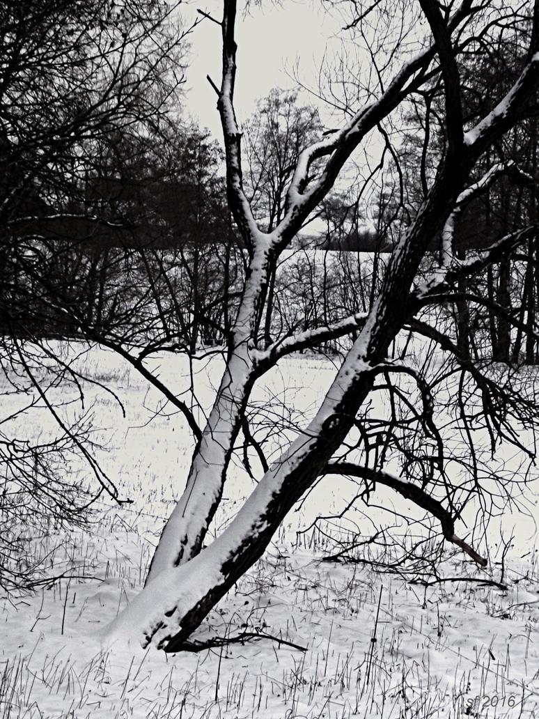 Trees in winter-series 4 by sonafoitova