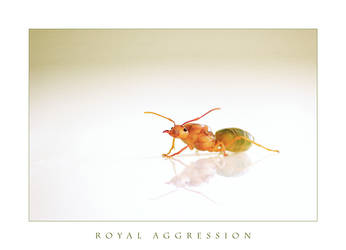 Royal Aggression by niko-demus