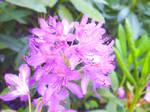 Flowers, close up