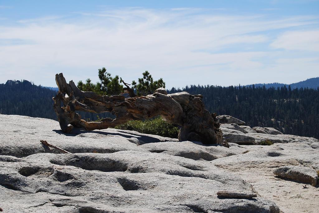 Yosemite 44 by tr4br